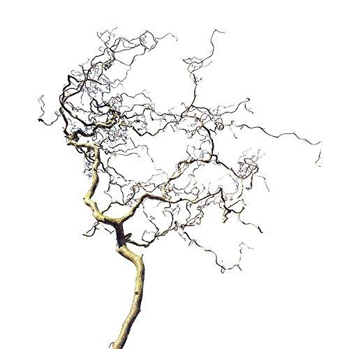 Vogelsitzzweig - Korkenzieherzweig: Sitzast aus Naturholz zum Aufhängen oder in den Käfig stellen - ergonomische Sitzmöglichkeit für Vögel im Vogelkäfig und freifliegend. Sitzstange aus unbehandeltem Holz mit unterschiedlicher Ast-Dicke. Durch Befestigung an Seilen kann der Vogelast auch als Vogelschaukel verwendet werden (mind. 100 cm lang und mind 40 cm breit)