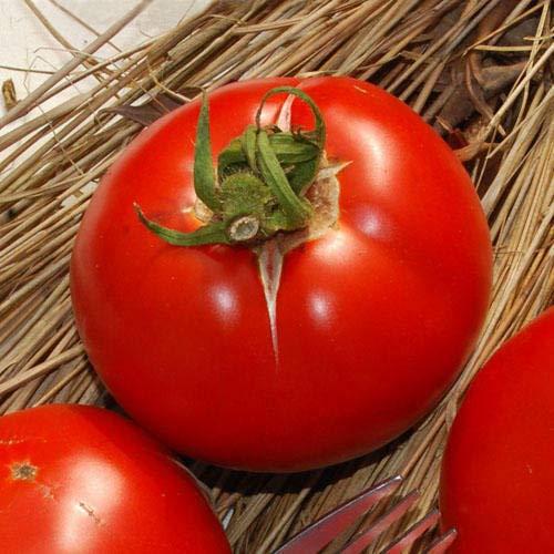 FERRY HOCH KEIMUNG Seeds Nicht NUR Pflanzen: Gemüse, Tomate, Saint Pierre 300 Feinste italienische Seeds # 4276