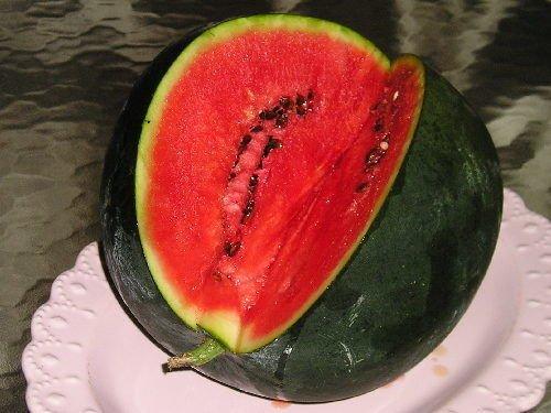 Portal Cool Samen Paket: 25+ Premium-Bush Typ Sugar y ne Samen-W 185