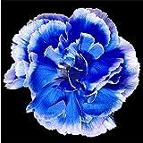 100pcs / bag clavel Semillas de flores perennes en maceta de jardín plantas con semillas Dianthus caryophyllus flor para el hogar y el jardín 2