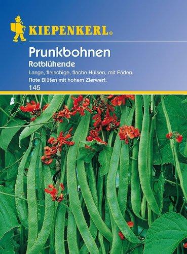 Produkt-Bild: Bohne Rotblühende / Feuerbohnen