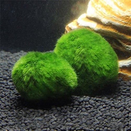 Kunstpflanzen Grüner Algenball, Wassergras ansieht Aquarium Plastikdekorations Aquarium Grünpflanzen Wasser Gras Zierpflanze Gefälschtes Gras des gefälschten Blumenfälschungs Grases Kunstrasen (Grün) (Bambus Bad Blatt)