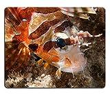 Luxlady Natural rubber Mousepads Image ID 31595004a Colorful Scorfano dettaglio Cebu Philippines