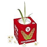 Pflanzen Anzucht Maispflanze - Anzuchtset Anzuchtserde Zimmergewächshaus Gentechnikfrei Mais Geschenkidee Mit Anleitung