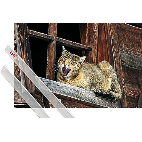 Poster + Sospensione : Gatti Poster Stampa (91x61 cm) Siesta Del Gatto, Non Disturbare E Coppia Di Barre Porta Poster Trasparente 1art1® - Non Disturbare Cat