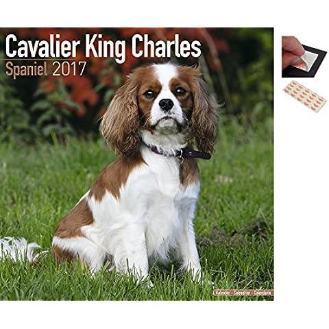 Confezione - 2 Articoli - Cavalier King Charles Spaniel 2017 Calendario Parete - Dimensioni Da Chiuso: 35 x 35 cm (30.5x30.5cm) e un Set di 4 Cuscinetti Adesivi
