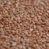 Terralith Marmor-Steinteppich 4-8 mm Rosso Verona für 1qm incl. Bindemittel