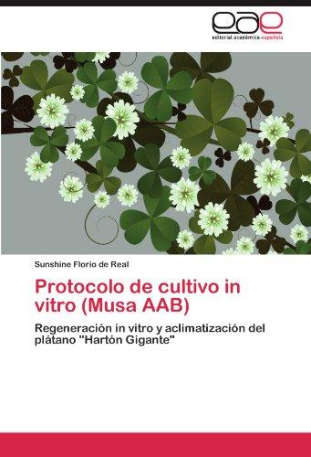 Protocolo de cultivo in vitro (Musa AAB) por Florio de Real Sunshine