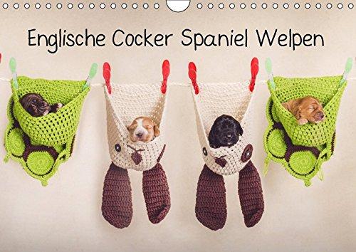 Englische Cocker Spaniel Welpen (Wandkalender 2019 DIN A4 quer): Monatskalender mit Cocker Babys (Geburtstagskalender, 14 Seiten ) (CALVENDO Tiere) -