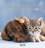 Tierfreundschaften 2019: aufstellbarer Postkartenkalender