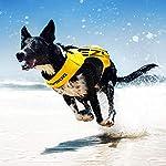 EzyDog X2 Boost Dog Lifejacket (Small, Pink) 9