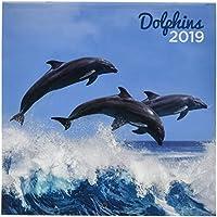 Grupo Erik Editores CP19016 - Calendario 2019 con diseño Dolphins, ...