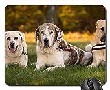 Gaming-Mauspads, Mauspad, Hunde Labrador Nature Pet Portrait Hundeportrait