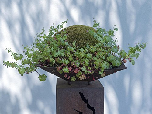 europalms-moss-ball-green-ca30cm