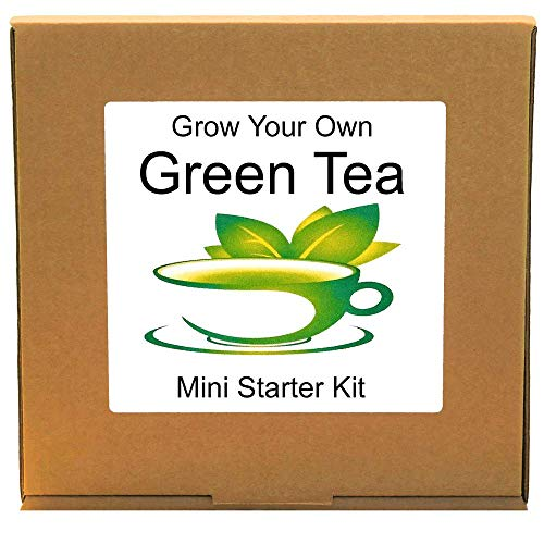 Grow Your Own Green Tea Plant Kit - Unusual, Unique and Quirky Complete Beginner Friendly Indoor Gardening Gift for Men, Women or Children