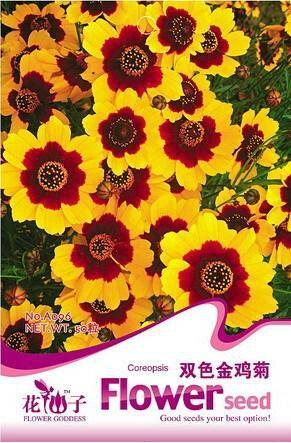 semillas-celosia-cristata-gigante-roja-comn-cresta-de-gallo-flor-anual-paquete-original-40-semillas-