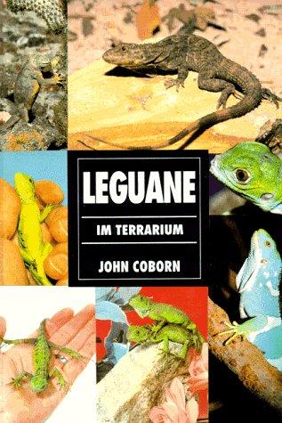 Leguane im Terrarium