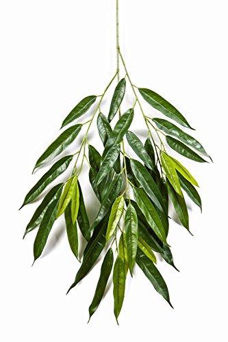 artplants Künstlicher Royal-Longifolia-Zweig Ranjan mit 40 Blättern, grün, 80 cm – Pflanze künstlich/Deko Zweig