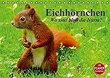 Eichhörnchen. Wo sind bloß die Nüsse? (Tischkalender 2016 DIN A5 quer): Die flinken Kletterer und Nüsseknacker unserer Wälder und Parkanlagen (Geburtstagskalender, 14 Seiten ) (CALVENDO Tiere)