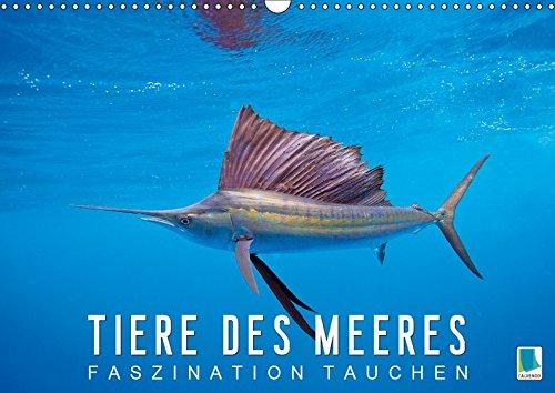 Tiere des Meeres: Faszination Tauchen (Wandkalender 2019 DIN A3 quer): Haie, Wale, Delfine: Tauchen Sie ab in die blaue Tiefe (Monatskalender, 14 Seiten ) (CALVENDO Tiere) -