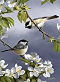 Reeves Painting by Numbers, Artist Collection Spring Chickadee - Medium