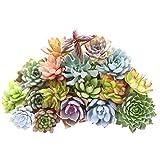 400pcs Rare Mixed Succulent Seeds Lithops Living Stones Plants Cactus Plant