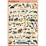 Mammals Educational Poster by 123Posters