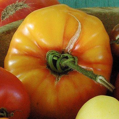 tomate-old-german-10-samen-alte-sorte-bis-zu-1kg-schwere-tomaten