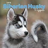 Siberian Husky Puppies - Husky-Welpen 2019 - 18-Monatskalender mit freier DogDays-App (Wall-Kalender) -