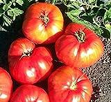 PLAT FIRM Germination Les graines PLATFIRM-5 paquets de 25 graines Graines Brunete-tomate