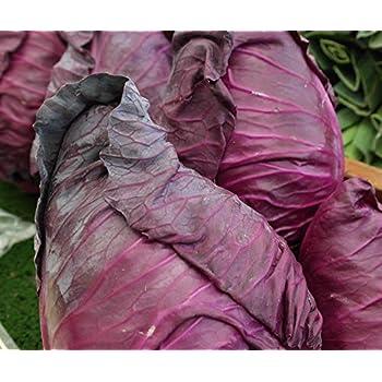 Blumenk/übel Pflanztopf /ØxH Gr/ö/ße : /Ø38x75 cm Eastwest-Trading GmbH Pflanzk/übel Cigar mit Dekosteinen aus Fiberglas in Hochglanz wei/ß