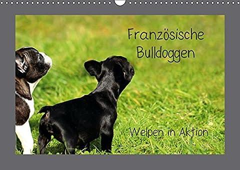 Französische Bulldoggen (Wandkalender 2018 DIN A3 quer): Welpen in Aktion (Monatskalender, 14 Seiten ) (CALVENDO Tiere) [Kalender] [Apr 01, 2017] Hultsch, (Aktion Welpen)