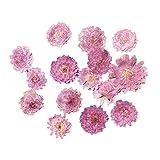 Baoblaze 10pcs Gepresste Blumen Getrocknete Blühtenknöpfe zum Basteln - Helllila Blumen