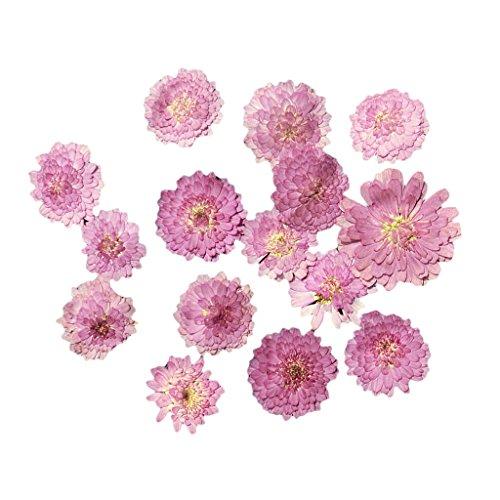 Descripción: - Hecho de flores secas reales. - Sellado herméticamente, los colores y la forma de las flores están bien conservados. - Excelente material para manualidades de bricolaje. - Se puede utilizar para hacer tarjetas de...