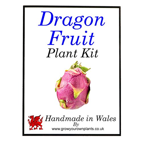 Dragon Fruit Plant Kit - Indoor Gardening Grow Your Own Kit