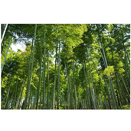 DUANWANBINGFBH Leinwand Wandkunst Frische Stil Grüne Bambus Bild Malerei auf Wand Wohnkultur Für Wohnzimmer-50x70 cm Kein Rahmen