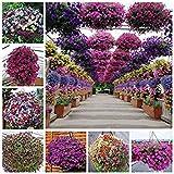 200pcs raras semillas de petunia shuttlecock cuerno flor de patata dulce flor flores bonsai semillas de flor hermosa plantadores de marihuana