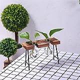 X-DAAO modische Transparente Glasvase mit Ständer aus Holz und Eisen für Wasserpflanzen, Dekoration, Geschenk, Two vases