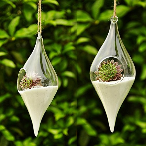 Super Siyaglass 2 terrari da appendere, in vetro, con fiori e piante, a  TF38