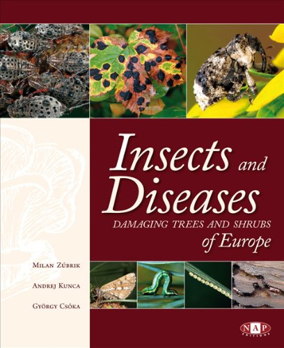Insects and Diseases Damaging Trees and Shrubs of Europe par Zubrik Kunca Csoka