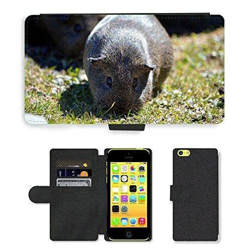 Just Mobile pour Hot Style Téléphone portable étui portefeuille en cuir PU avec fente pour carte//m00138220Guinée Pig lisse cheveux lemonagouti//Apple iPhone 5C