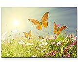 Paul Sinus Art Leinwandbilder | Bilder Leinwand 120x80cm Schmetterlinge auf Einer Blumenwiese im Sommer