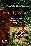 Prachtguramis: Juwelen des Urwalds in der Natur und im Aquarium