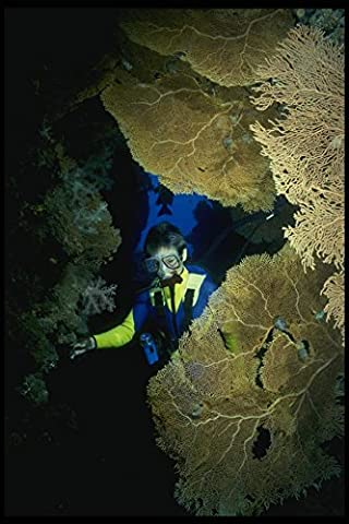 156036 Scuba Diver In Cave With Pacific Sea Fans A4 Photo Poster Print 10x8