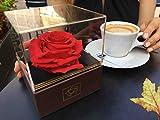 Konservierte Rose / Haltbare Rose / Ewige Rose / Stabilisierte Rose XXL (8.5 - 11 cm) - Designer Geschenkbox (Braun & Acrylglas)