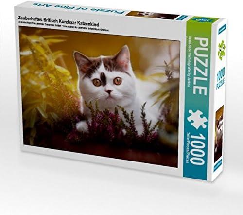 CALVENDO Puzzle Zauberhaftes Britisch Kurzhaar Katzenkind 1000 Teile Lege-Grsse 64 x 48 cm Foto-Puzzle Bild Von Tierfotografie by Janina BüRGE | Nombreux Dans La Variété