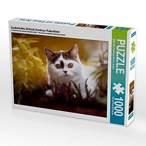 Zauberhaftes Britisch Kurzhaar Katzenkind 1000 Teile Puzzle quer (CALVENDO Tiere)