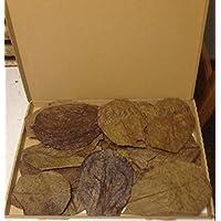 30 Stück Seemandelbaumblätter 10-15cm ★BLITZVERSAND im Karton★ Seemandellaub Catappa Leaves ★ Original Markenware von SMSF-Indonesia