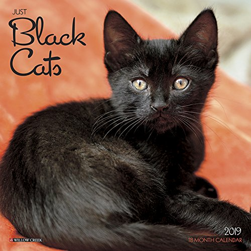 Black Cats Mini 2019 Wall Calendar -