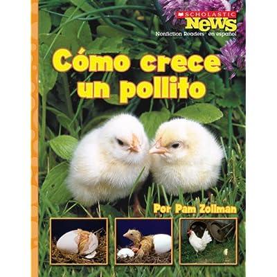 Como Crece Un Pollito Scholastic News Nonfiction Readers En